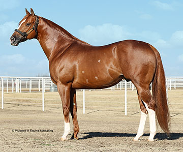 Stallionesearch Com The First Stop In Stallion Research For