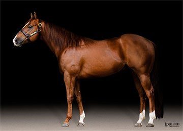 Stallionesearch Com The First Stop In Stallion Research